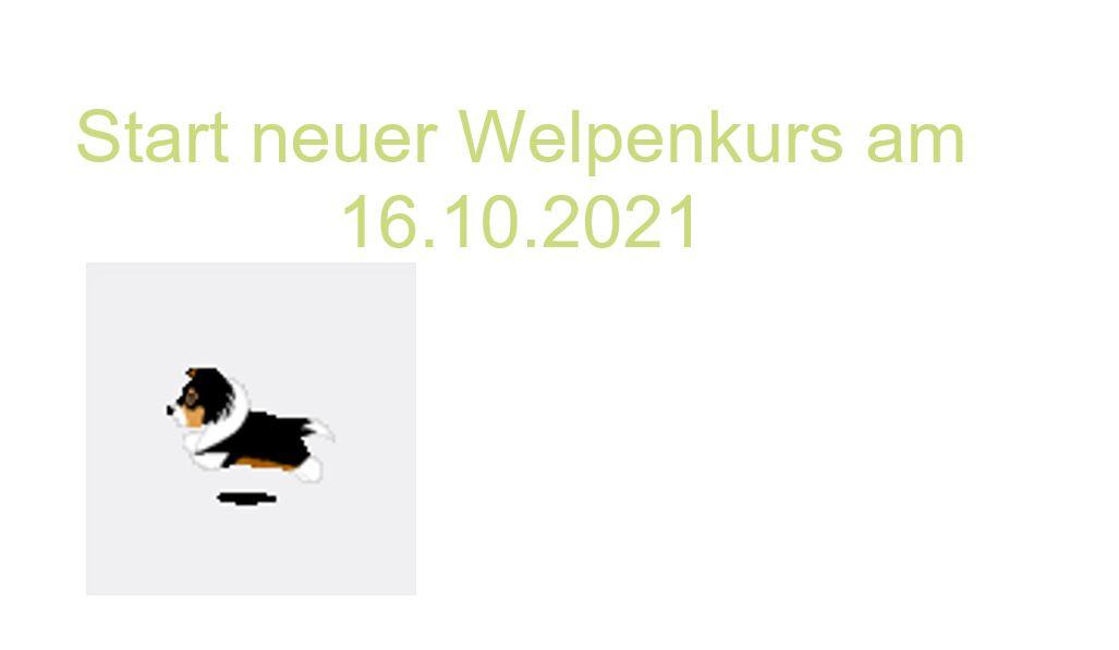 neuer Welpenkurs ab 16.10.2021